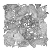 ARLETTE ESS-sleeping-dogs-bw-artprint
