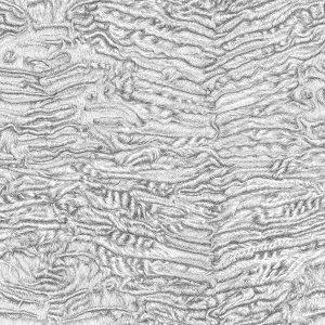 Swakara fur drawing by Arlette Ess