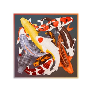 ARLETTE-ESS-koi-2-color-artprint-frame